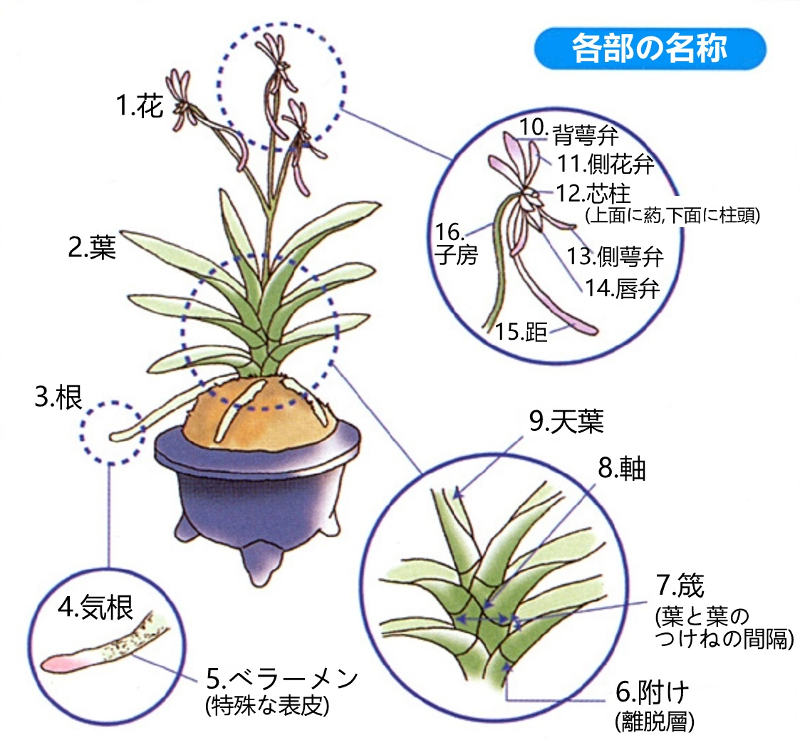 Neofinetialand Fuukiran01